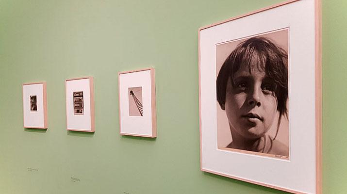 Ausstellung Aenne Biermann. Vertrautheit mit den Dingen in der Pinakothek der Moderne in München